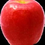 sadnice jabuke pink lady
