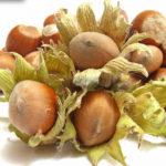 Voćne sadnice Avelino lešnik